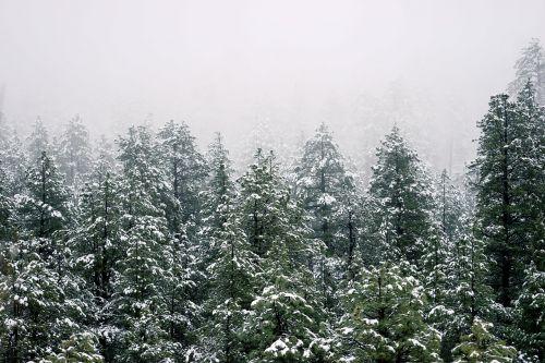 medžiai, miškas, žiema, visžalis, gamta, žalias, aplinka, kraštovaizdis, lapija, šaltas, sezonas, filialai, peizažas, parkas, miškas, ramus, ekologija, lapai, natūralus, kaimas
