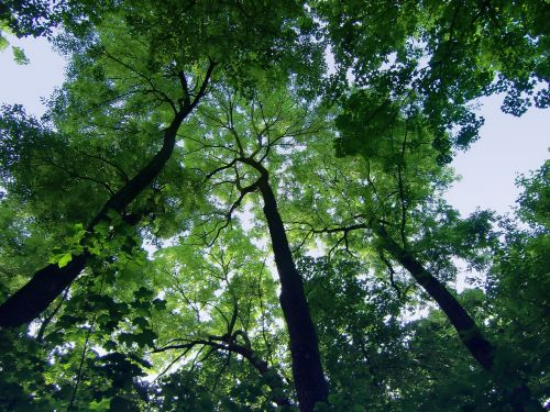 trees sky high