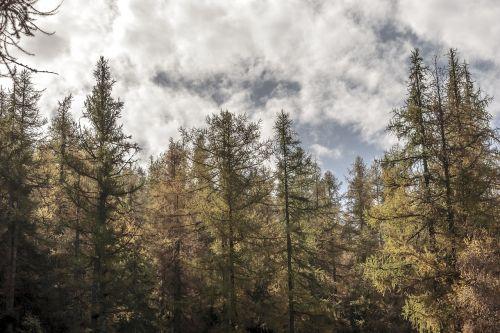 trees valle d'aosta sky