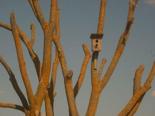 trees life crimea
