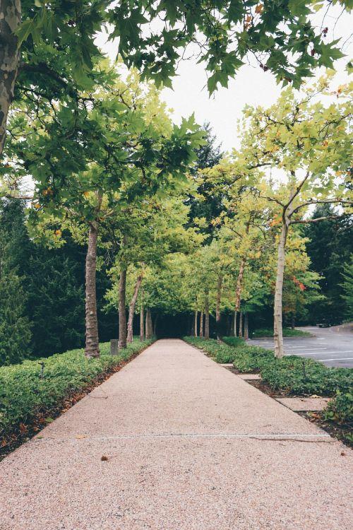 medžiai,kelias,kelias,gamta,miškas,žalias,kraštovaizdis,vasara,lauke,kelias,žolė,diena,parkas