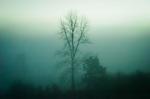 trees nature fog