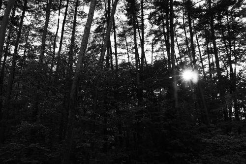 trees sunbeams backlight