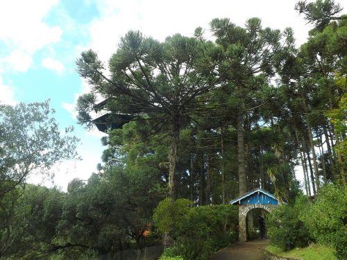 medžiai,dangus,miškas,gamta,žalias,veja,rio grande do sul,Brazilija,žalias medis