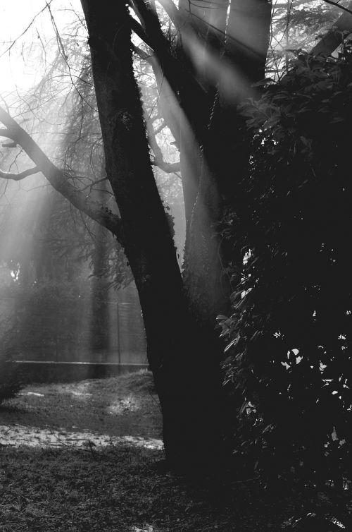 trees solar light shadows