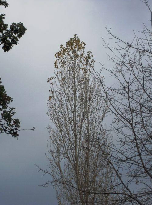 Trees Against A Grey Sky