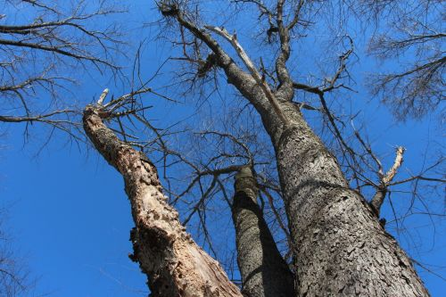 Trees And Azure Sky