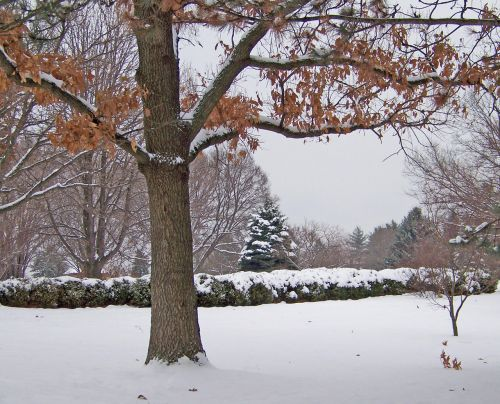 Trees And Bushes In Snow