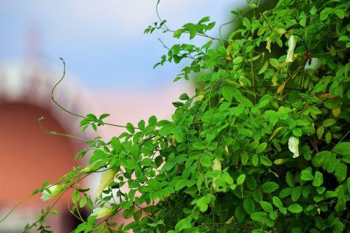 Trees And Foliage 24