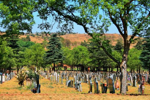 Trees & Graves In Military Cemetery