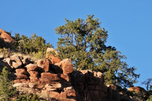 Trees And Red Rocks