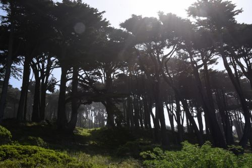 Trees And Sunrays Background