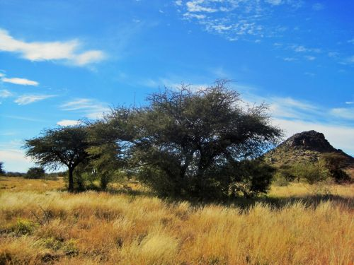 Trees And Veld In Northern Cape
