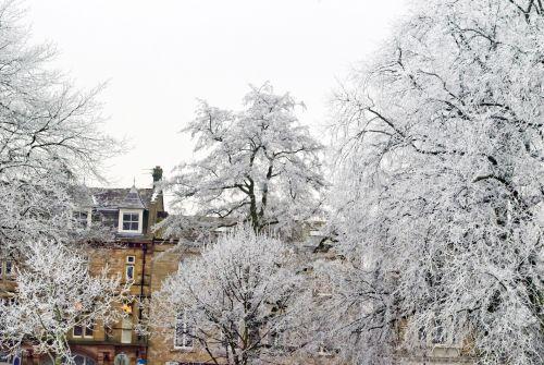 Trees And Winter Seasons