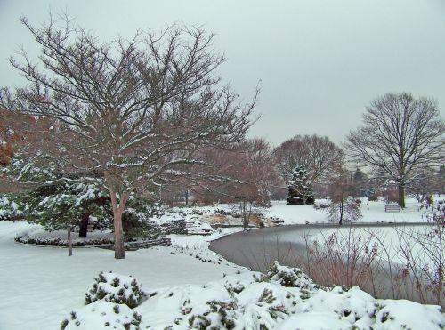 Trees Around Frozen Pond