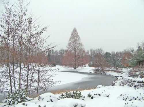 medžiai, tvenkinys, ledas, sniegas, žiema, medžiai aplink užšalusį tvenkinį