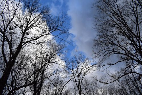 trees branches fluffy clouds blue sky