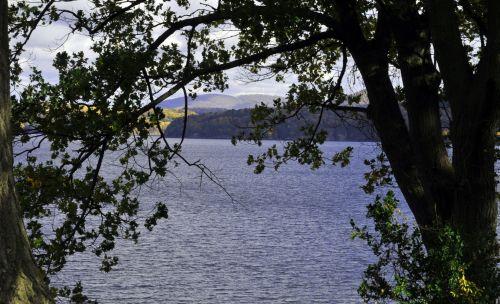 Trees Framing The Lake