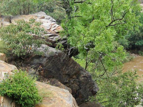 Trees Growing Between Rocks
