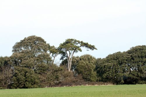 Trees In Countryside