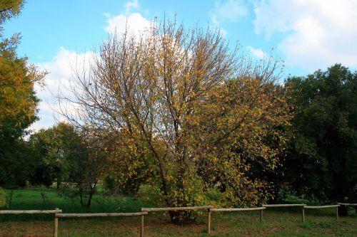 parkas, medžiai, lapai, keičiasi, gelta, tvora, medžiai parke