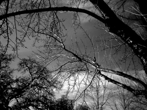 Trees Infrared A