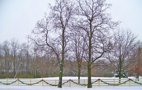 Trees, Snow, And Decorated Fence