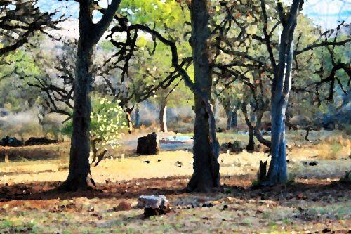 medžiai, aukštas, gamta, meno, medžiai su meniniu efektu