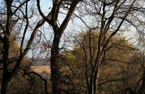 medžiai, aukštas, plikas, filialai, medžiai su atsilaisvintais lapais