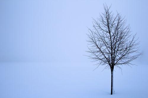treet snø vinter