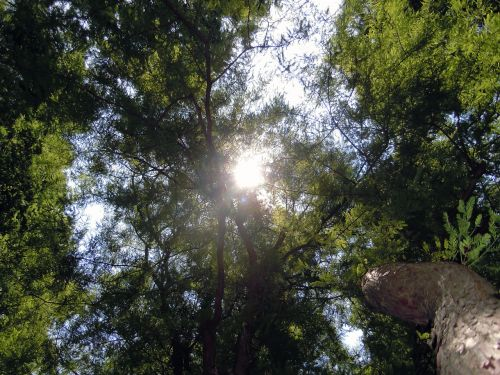 trejetas,medžiai,atgal šviesa,vilties spindulys,saulė,miškas