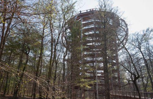 medelynų kelias,platforma,medžio takas,trejetas,aukštyn,statyba