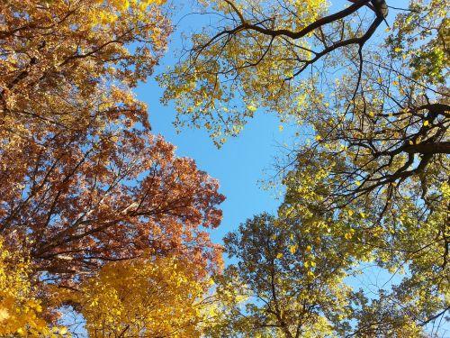 treetops autumn fall