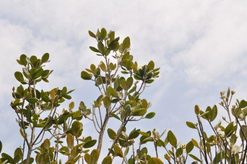 treetops foliage green leaves