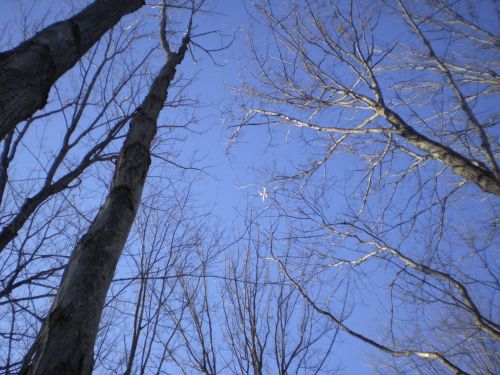 Treetops In The Sky