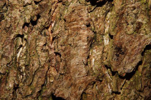 tribe bark nature