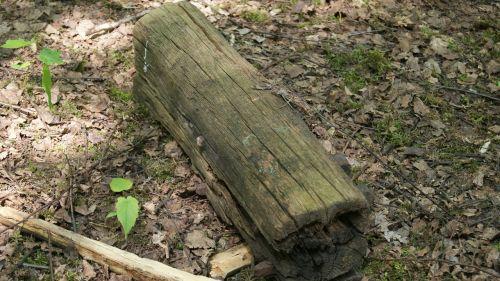 tribe tree wood
