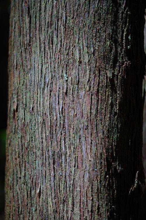 tribe log tree heath