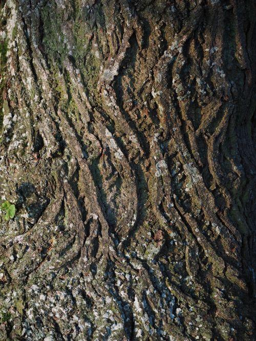 tribe bark log
