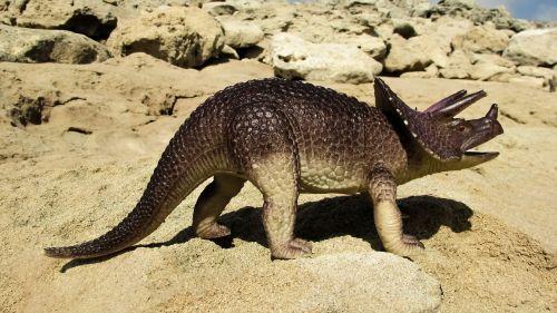 triceratops dinosaur reptile