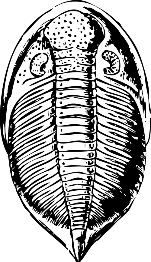 trilobite fossil animal