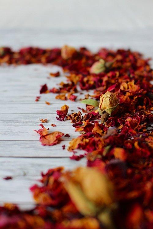trockenblume  plant  blossom