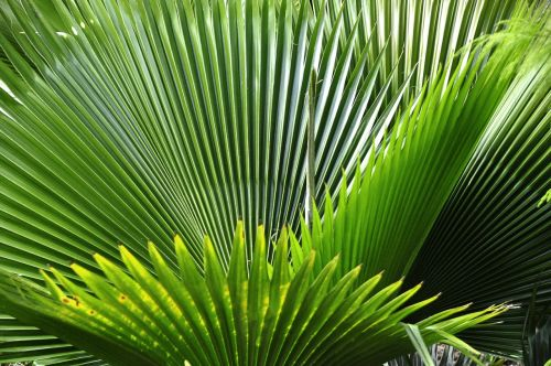 tropical plant nature