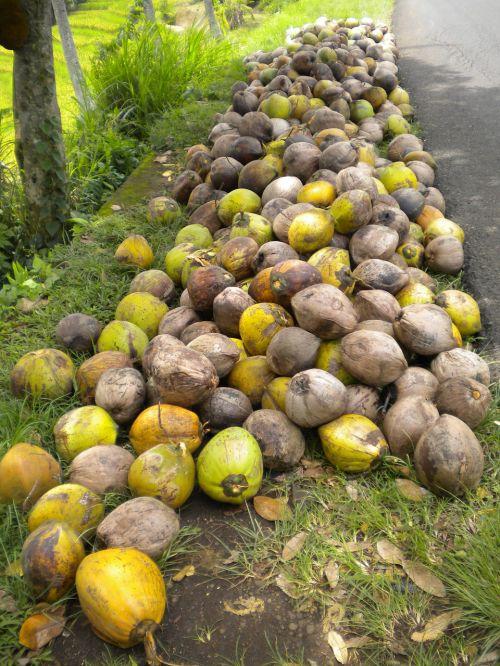 tropical coconuts bali