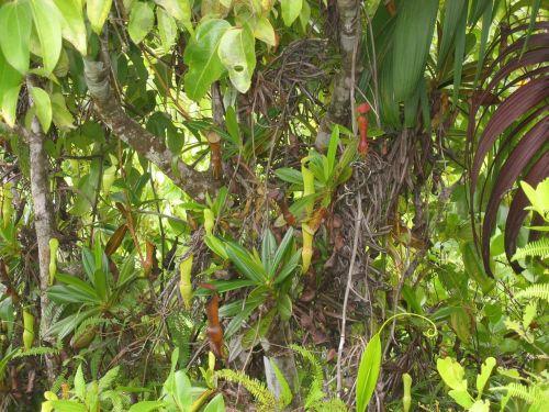 tropical landscape vegetation
