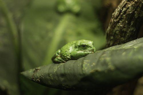 tropical frog tropical frog