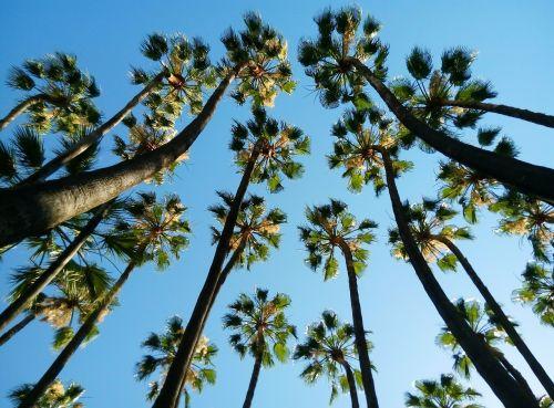 tropical palms malaga