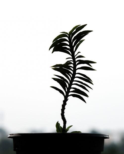 tropical nature tree