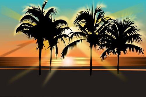 tropical  palm trees  beach