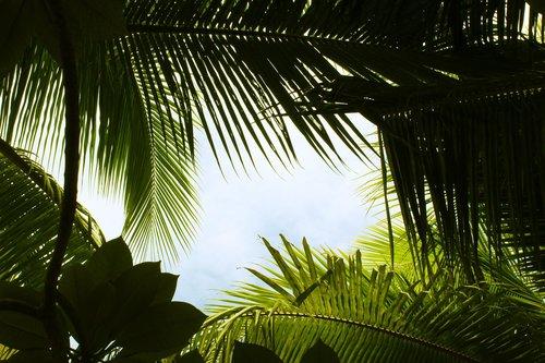 tropical  green  summer